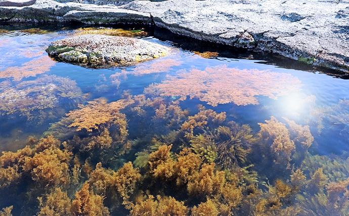 五島列島の伝統漁「スケアン」はレジャーに最適 元々は世界最古の漁?
