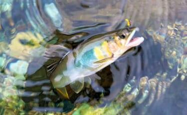 【2021九州】鮎トモ釣り初心者入門 基本の釣りと「オモリ釣法」を解説
