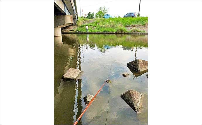 テナガエビ釣りで「ツ抜け」 子連れ釣行にもオススメ【千葉・八間川】