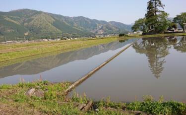 滋賀県で『魚のゆりかご』になる水田作り進行中 琵琶湖の生態系保全にも