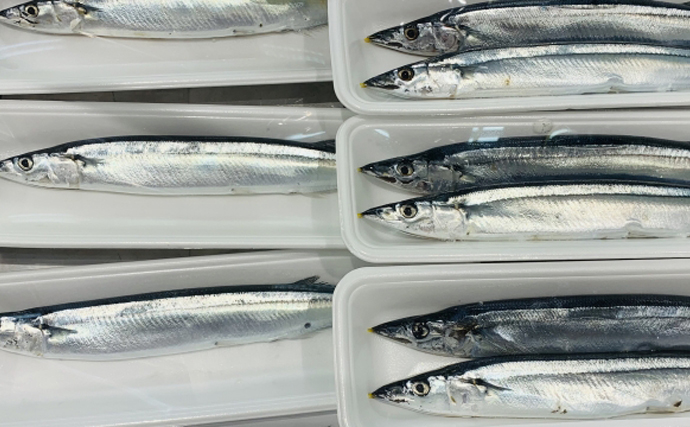日本の漁獲量は30年前の『3分の1』にまで減少 漁業不振は温暖化のせい?