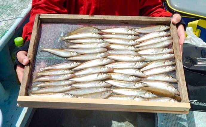 船キス釣りでシロギス47匹 低活性にパターン掴めず苦戦【愛知・石川丸】