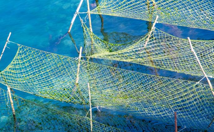 海藻専用の『陸上養殖』施設がオープン予定 あえて陸で行うワケとは?