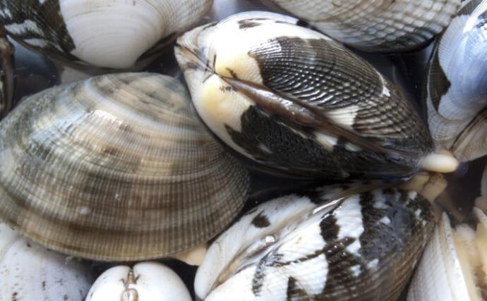 貝を食べる貝『ツメタガイ』の生態 養殖業にとっては厄介者だけど美味