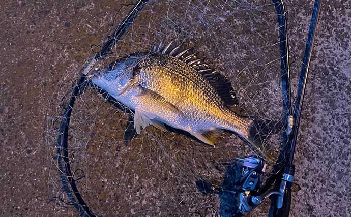 『ライトゲーム』ステップアップ解説:「白身」の魚はバテさせて獲る?