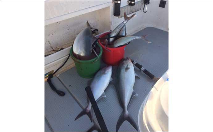 釣魚の「生臭さ」対処法:釣り場での下処理法と持ち帰る際の留意点