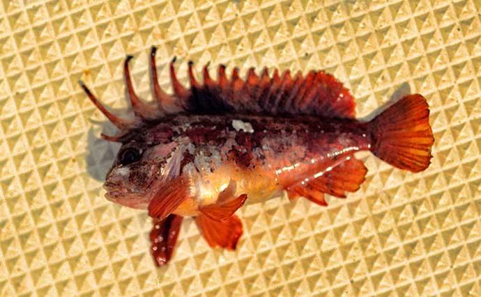 釣りデビューの前に知っておこう:堤防で釣れる危険な『毒魚』4選