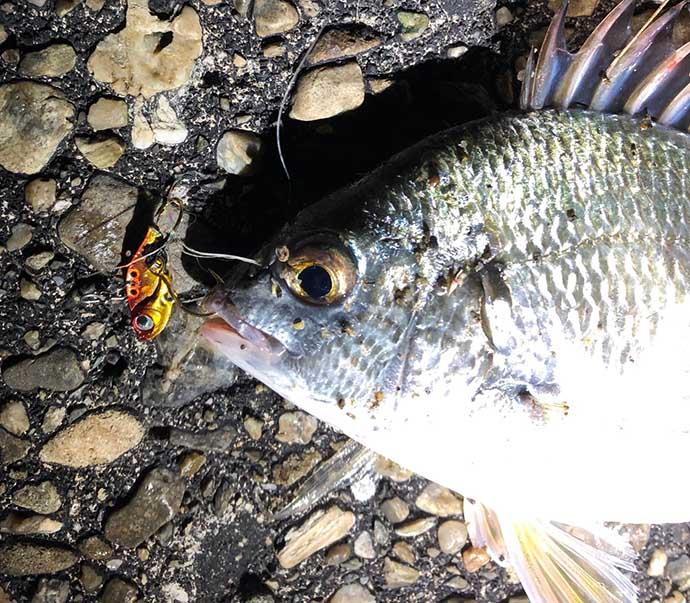 まずはここから覚えたい『ライトブリーム』用語集:タックル&釣り方関連