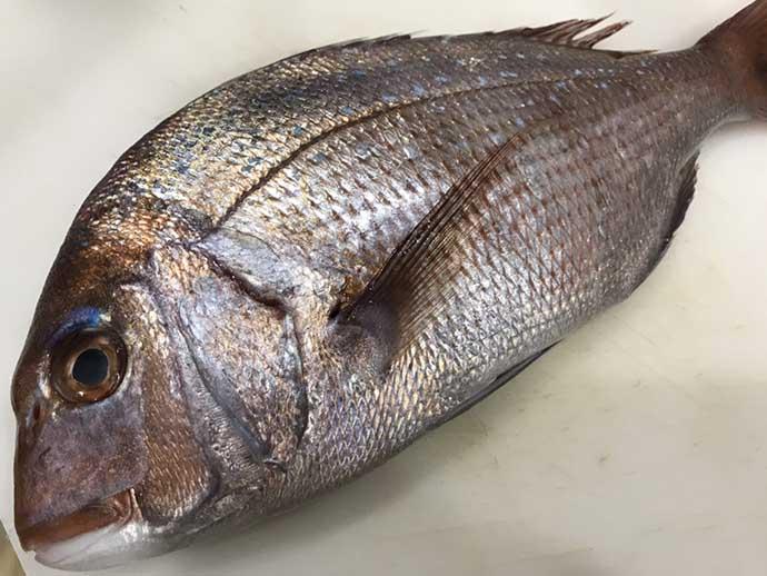 釣り人的『食品ロス』削減レシピ:白身魚のすり身揚げ