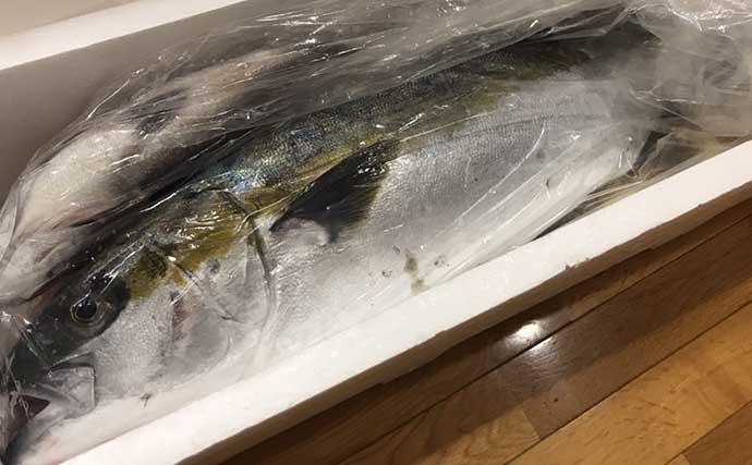 釣り人の強い味方「長期保存可能」サカナレシピ:ヒラマサの西京焼き