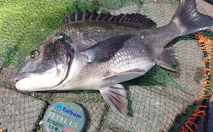今さら聞けないフカセクロダイ釣りのキホン:鉄則は「遅アワセ」な理由3選