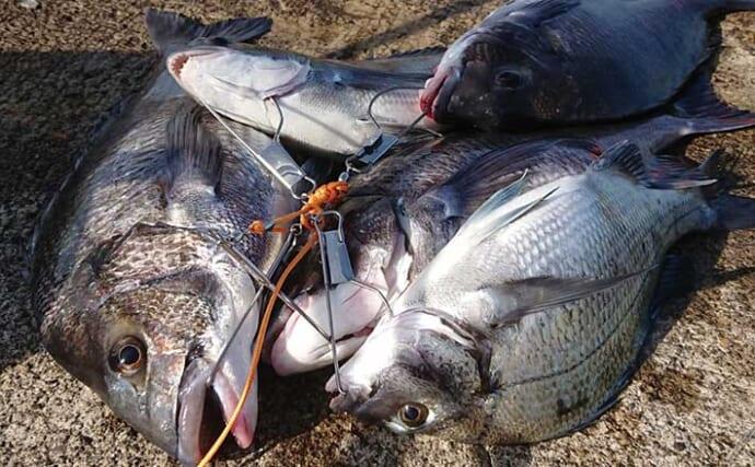 人気堤防からカゴ釣りで良型クロダイ5匹【新潟・直江津港第3東防波堤】