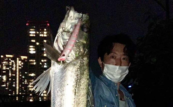 東京湾奥『シーバスゲーム』でバイト連発 バチ抜け狙い撃ちで5匹手中