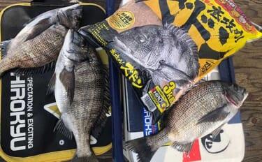 乗っ込み終盤のチヌフカセ釣りで本命3匹 沈め探り釣りで攻略【大阪湾】