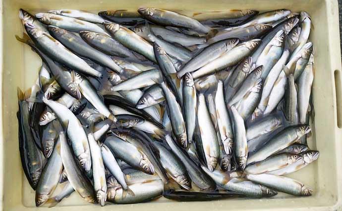 【2021静岡】鮎トモ釣りオススメ河川:興津川 流れ穏やかで釣りやすい
