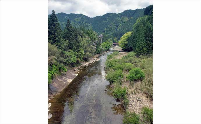 【2021愛知】鮎トモ釣りオススメ河川:振草川 静かにアプローチが吉