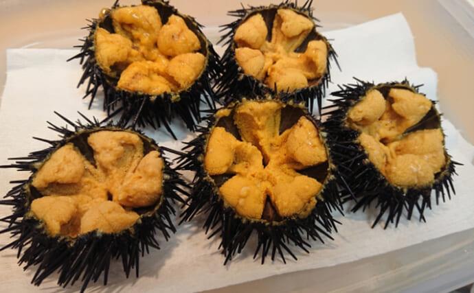 『陸』の特産品を食べて育つ「ウニ」 キャベツにタケノコにミカンまで
