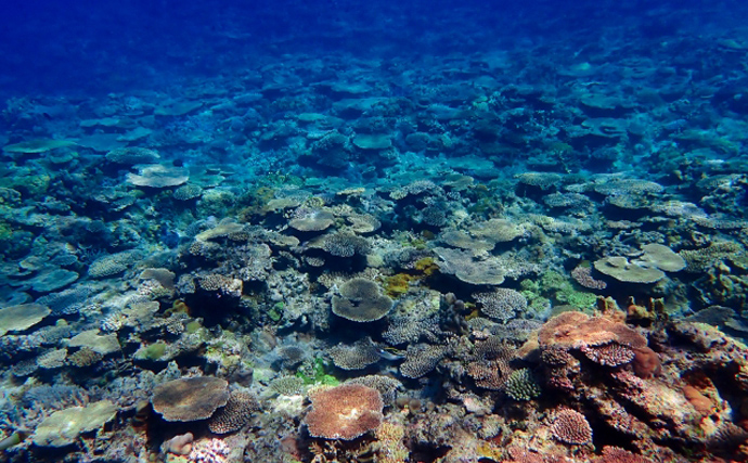 サンゴの『一斉産卵』が撮影される 卵は他海洋生物の貴重な食料に?