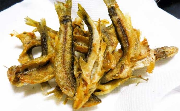 釣りのゲスト魚を美味しく食べよう:アブラハヤ 二度揚げで丸ごとパクリ