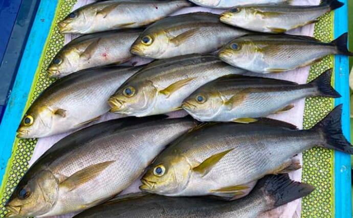 解禁直後の東京湾イサキ釣りで35cm良型 低活性時は「待ち」が重要?