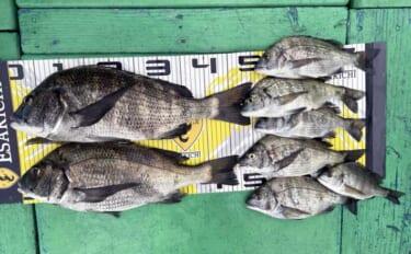 【三重】カカリ釣り最新釣果 各地で年無し含み良型クロダイ顔出し