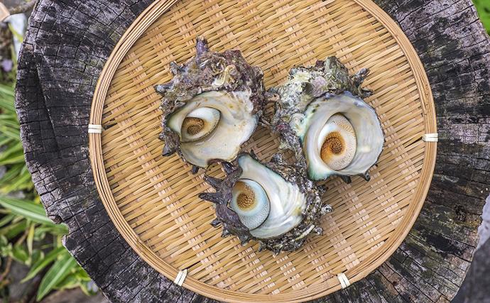 伝統漁『ノボリコ漁』が今年も開始 各地で愛される「小型のハゼ」たち