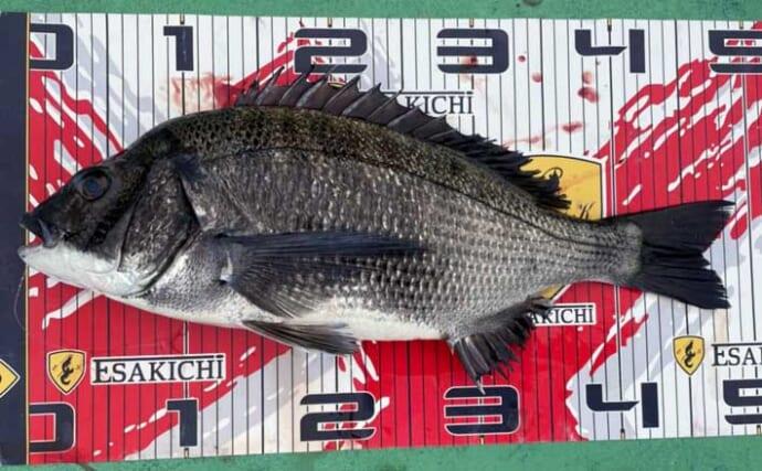 【三重】カカリ釣り最新釣果 56cm頭に良型クロダイが好調ヒット中