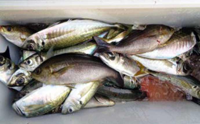 【三重】船釣り最新釣果 レンタルボートで53cm頭にマダイ快釣