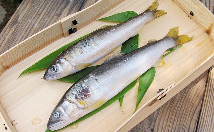「ウ」で鮎を漁獲する『鵜飼』がスタート 獲れた魚が珍重されるワケは?