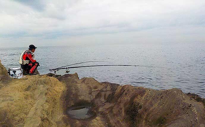 地磯でアオリ狙い泳がせ釣り 現地調達の小魚で本命900g【神奈川】