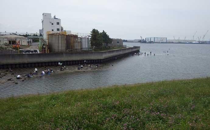 盛期迎える東京湾奥「潮干狩り」で激レア『オオノガイ』【江戸川放水路】