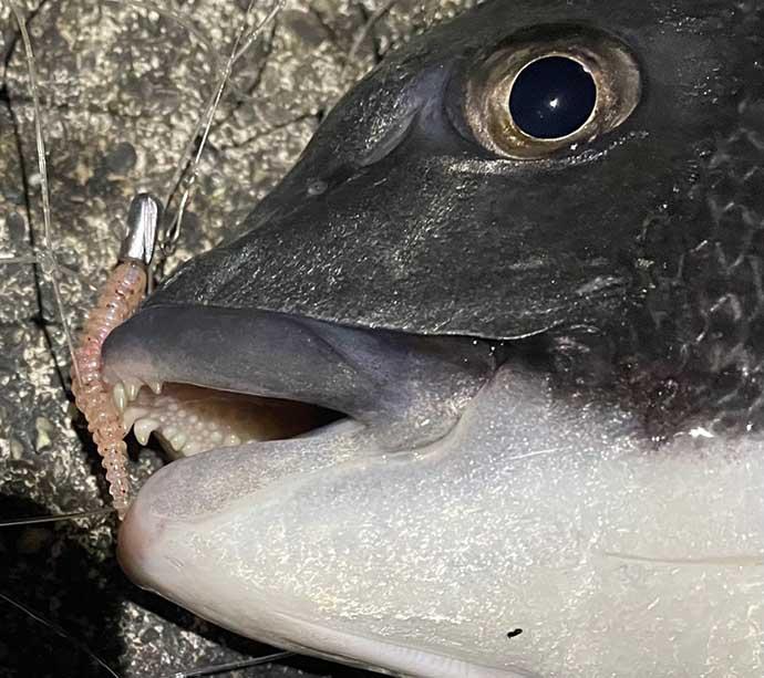 『アジング』ステップアップ解説:ボトムの釣り方 深追いは厳禁?