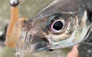 今さら聞けないワームのキホン:釣り人それぞれのラッキーカラーとは?