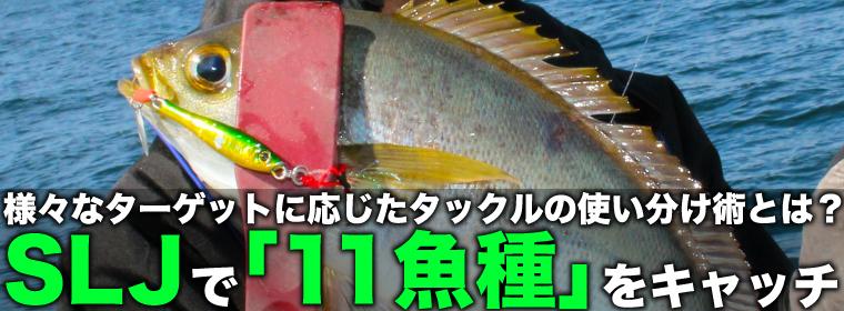 SLJで「11魚種」達成 ターゲットに応じたタックル使い分け術とは?