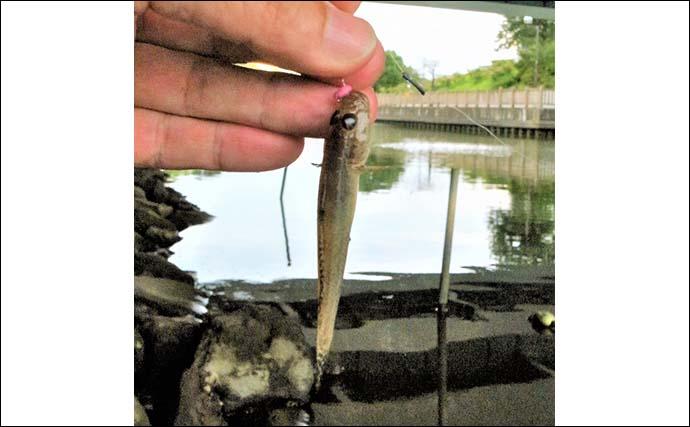 都内の公園でテナガエビ釣り 夕方に活性上がり17尾【新左近川親水公園】