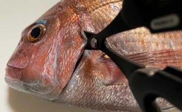 今さら聞けない沖釣りのキホン:船上で実施可能な簡単『血抜き』術
