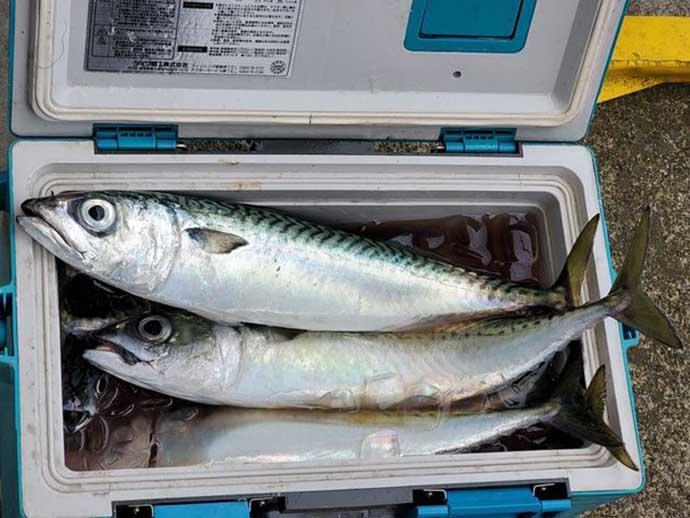 週末ナニ釣れた?沖釣り速報:相模湾LTルアー船で良型サバ盛況【関東】