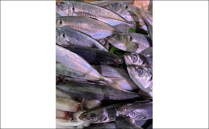 釣り人的大衆魚「カサゴ」が市場では高級魚のワケ 1kg4000円の時も?