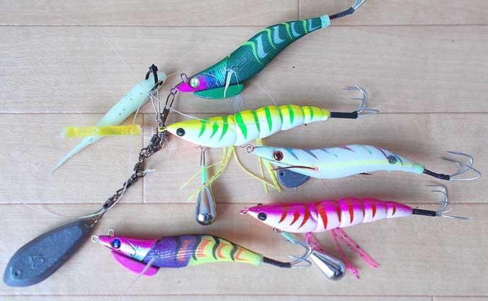 明石『エギタコ』釣りがシーズンイン 2日間のボート釣行で14匹【兵庫】