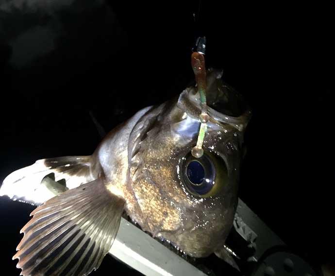 『ライトゲーム』ステップアップ解説:魚が「スレる」釣り方とは?