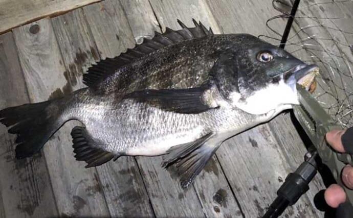 今さら聞けないライトゲームのキホン:大型魚いてもアジ&メバル釣れる?