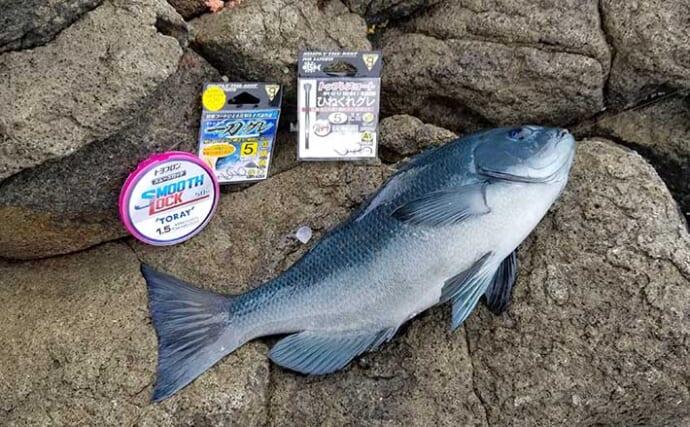 磯フカセ釣りで38cm頭にメジナ好釣 小サバ不在で肩透かし?【静岡】