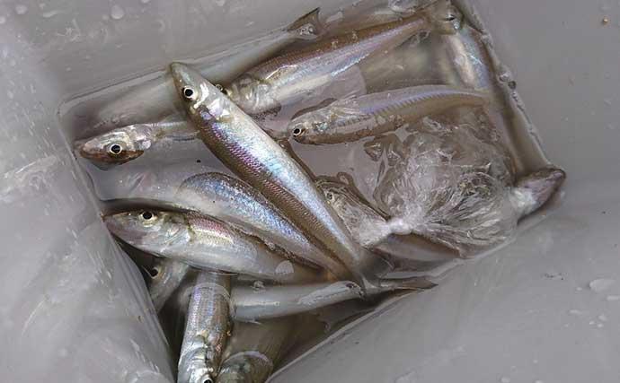 今さら聞けない沖釣りのキホン:初心者でも簡単にできる魚の『脳締め』