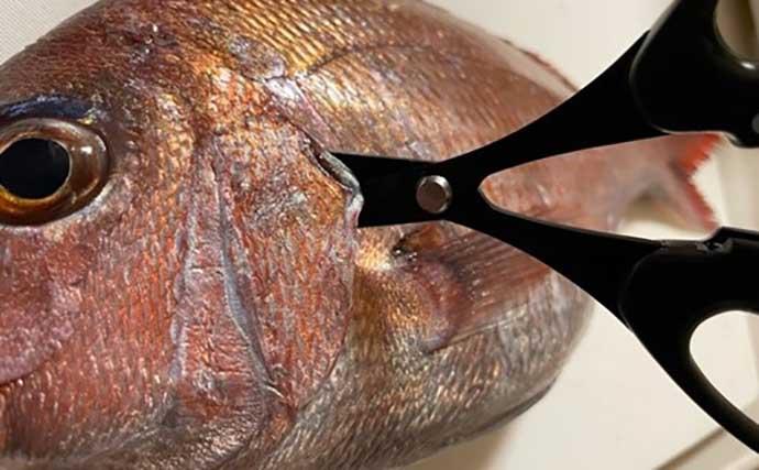 今さら聞けない沖釣りのキホン:船上での釣魚下処理に便利な道具5選