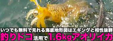 「超高精度」海底地形図『釣りドコ』活用術 「高難易度」ヒラメを攻略