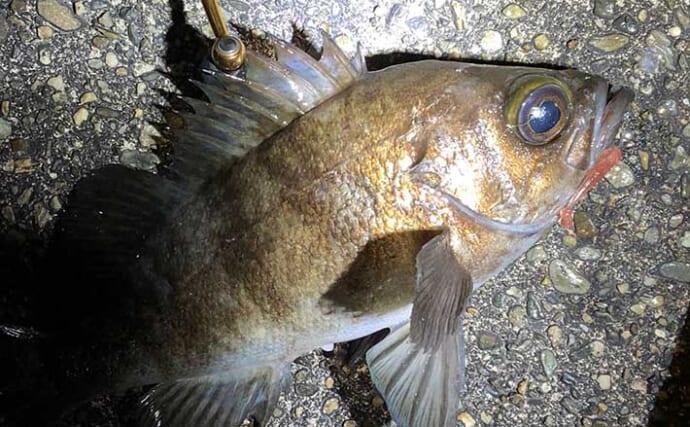 海のルアー釣りを始めよう:メバルを狙う「メバリング」ってどんな釣り?