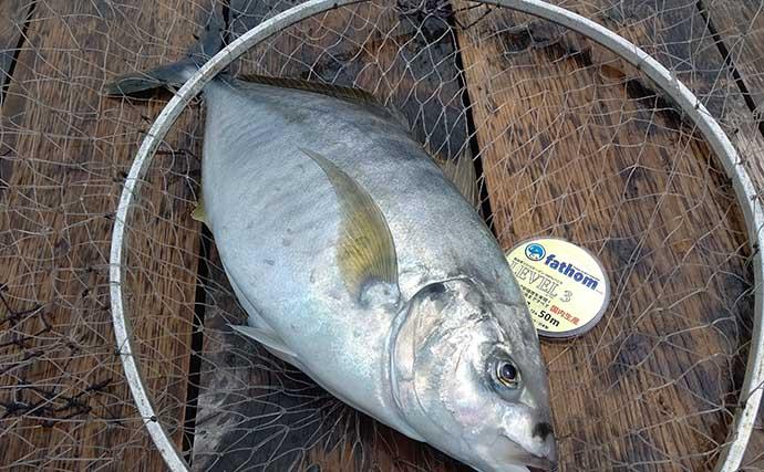海上釣り堀でシマアジ手中 現地調達の小サバ泳がせが最強?【静岡】