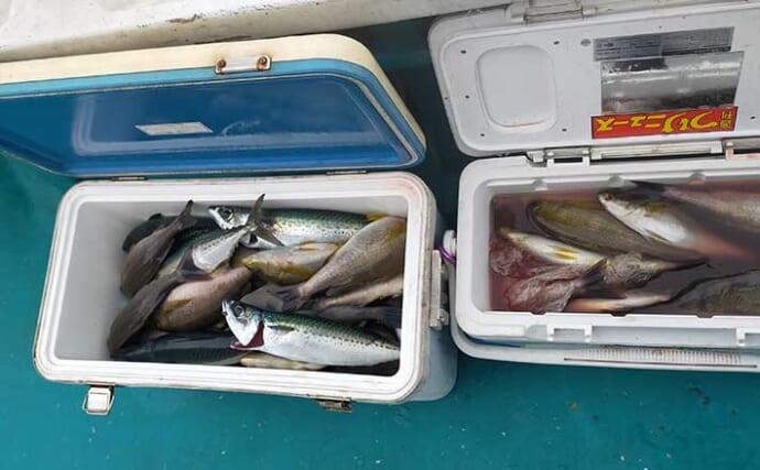 印南のイサキ釣り盛期突入 2つのクーラー満タンに【和歌山・良栄丸】