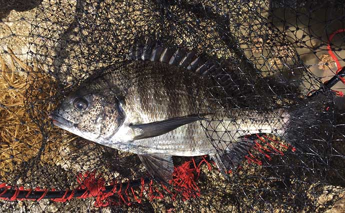 沖磯フカセ釣りで快釣 62cmマダイに良型チヌ合計19匹【兵庫】