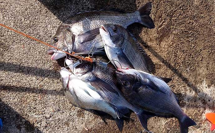 高級釣りエサ『ボケ』の正式名称は「ニホンスナモグリ」 大半は中国産